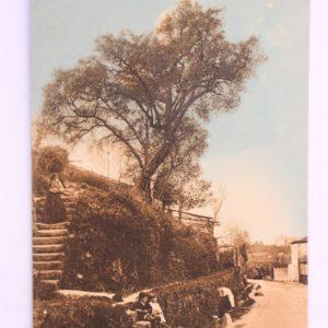 Arredores do Convento de Vairão - postal